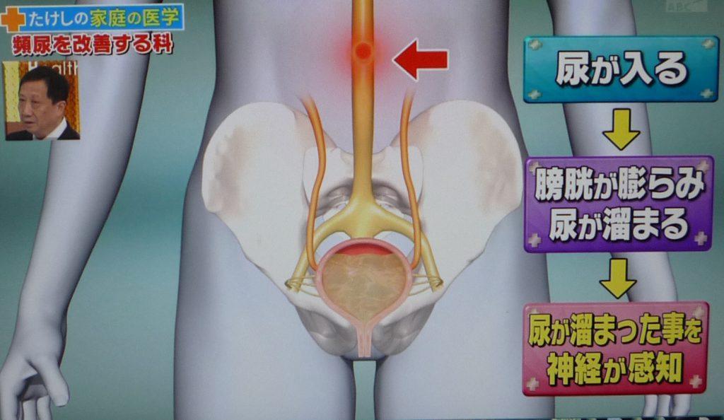たけしの家庭の医学!頻尿の改善法